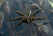 Mass Audubon | Spiders | In and About the News | Scoop.it