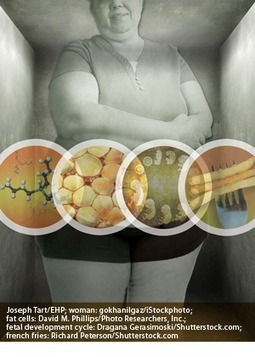Environmental Health Perspectives: Obesogens: An Environmental Link to Obesity | diabetes and more | Scoop.it