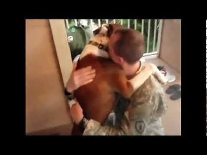 Military Reunions with Man's Best Friend: Dogs Wel | Consulting | Scoop.it