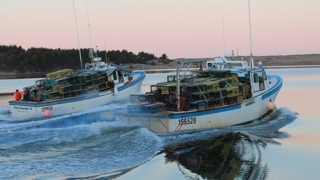 Lobster fishermen 'happy to get back to work' as season begins | Nova Scotia Fishing | Scoop.it