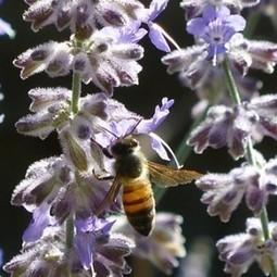 Gardening to Help Pollinators |National Pollinator Week | Annie Haven | Haven Brand | Scoop.it