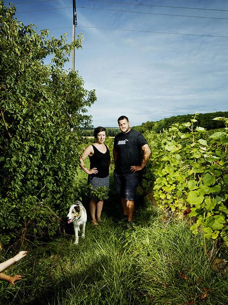 Les néo-vignerons du Jura | Le Vin et + encore | Scoop.it