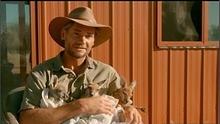 BBC Two - Natural World, 2012-2013, Kangaroo Dundee, Part One, Being a kangaroo mum | Life on Earth | Scoop.it