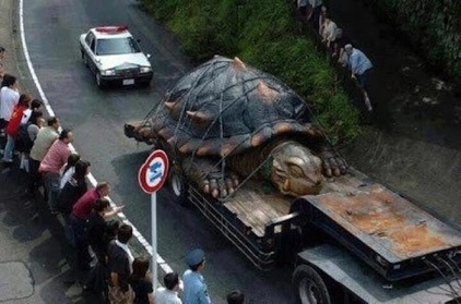 WOW AMAZING »» World's Largest Tortoise found in Amazon Basin – 800lb #Animals #Amazon | Animals | Scoop.it
