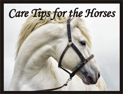 IMPORTANT CARE TIPS FOR THE HORSES | multionlineinfo | Scoop.it