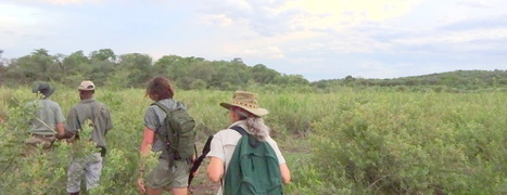 Tracking African Wildlife - New Perspective | Wildlife Conservation: People and Stories | Scoop.it