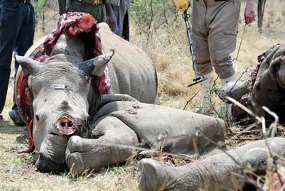 Hi-tech bid with US firm to halt rhino slaughter | What's Happening to Africa's Rhino? | Scoop.it