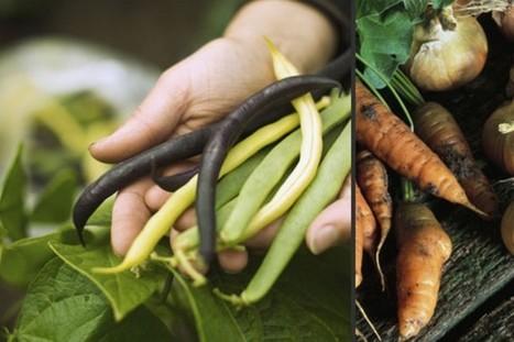 Agriculture biologique et OGM : l'Europe nous consulte ! | Communication et engagement : responsabilité, éthique, utilité | Scoop.it