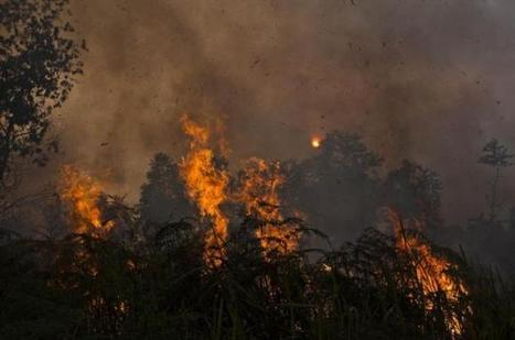 Indonesia's burning question | Sustain Our Earth | Scoop.it