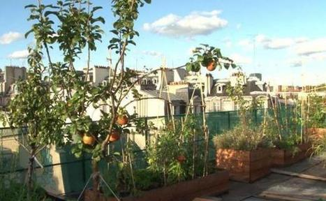 Un potager en ville, tendance bobo ou acte politique? | Innovation sociale | Scoop.it