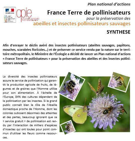 Consultation publique pour la préservation des abeilles et insectes pollinisateurs sauvages | EntomoNews | Scoop.it