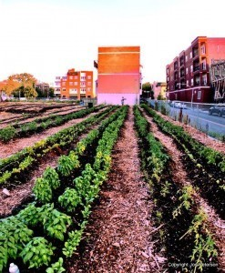 Chicago's Peterson Garden Project – Built for Victory | Annie Haven | Haven Brand | Scoop.it