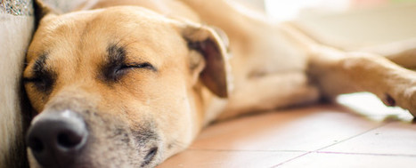 The Argument for Napping: Why You Should Nap When You Like! - Workshifting | Virtualization and Clouds | Scoop.it