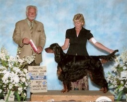 Gordon Setter Puppies For Sale in Wisconsin | Gordon Setter Puppies For Sale | Scoop.it