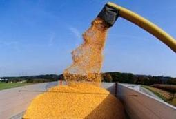 Brazilian import-export company expands corn exports to Middle East:. | MAIZE | Scoop.it