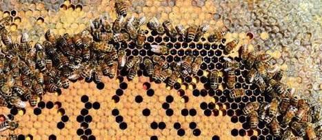 Greenpeace veut défendre les abeilles devant la justice européenne | EntomoNews | Scoop.it