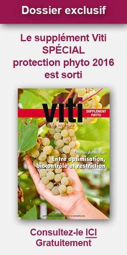 Les vins Sud de France en Chine seront dégustés In et Off! | Vins Sud de France | Scoop.it
