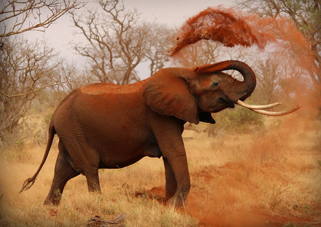 Elephant and Rhino Poaching | Conservation | Scoop.it