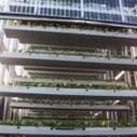 Vertical Farming in Singapore Reaches New Heights - Eat. Drink. Better. | Vertical Farm - Food Factory | Scoop.it