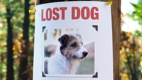 Lost Fido? There's an App for That | Florida Dog Rescue | Scoop.it
