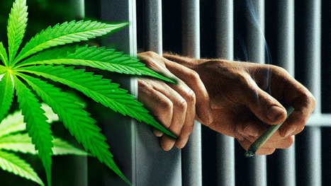 Judge Gives Man LIFE IN PRISON For Marijuana Conviction | anonymous activist | Scoop.it