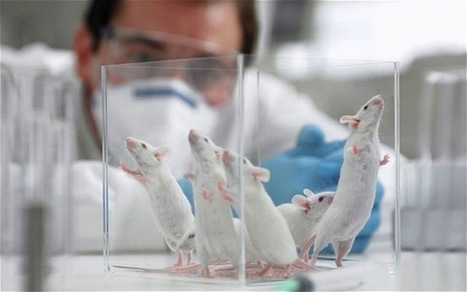 3D printed human cells could end animal testing within 5 years | Impact Lab | Physics, chemistry and biology. | Scoop.it