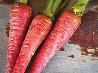 Pusa Rudhira Carrot (Red Carrot) - (Daucus carota)-Store.underwoodgardens.com | Permaculture, Homesteading, Ecology, & Bio-Remediation | Scoop.it