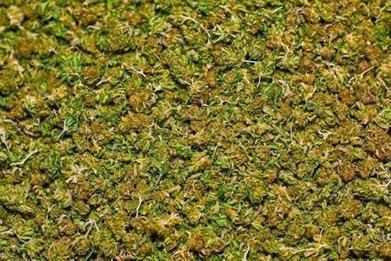 Medical marijuana doctors loses license to practice - The Boston Globe | enjoy yourself | Scoop.it