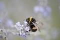 Un rapport européen inquiétant sur les dangers des pesticides pour les abeilles - Environnement - France Info | Apiculture et protection de l'environnement | Scoop.it