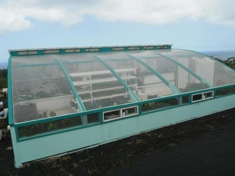 Friendly Aquaponics, Inc. | Hawaii Group Trainings | Aquaponics Source | Scoop.it