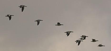 Une carte animée de la migration de 118 espèces d'oiseaux en Amérique | J'écris mon premier roman | Scoop.it