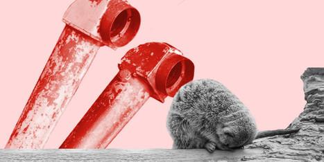 Will Periscope Kill Meerkat? | Inspiratie | Scoop.it