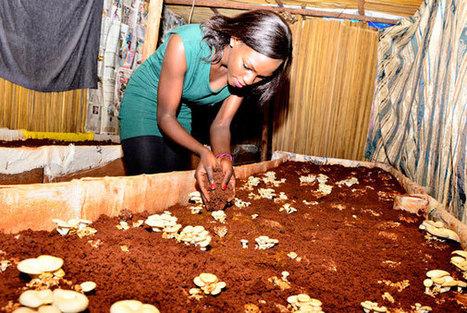 Uganda: Beauty queen on her life as a mushroom farmer | Mushroom cultivation in The Third World | Scoop.it