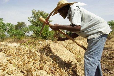 Avec l'agroécologie, un village togolais sort de la fatalité et de la pauvreté | Economie Responsable et Consommation Collaborative | Scoop.it