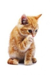 30 Reasons We Simply Love Cats | Cat Care And Fun | Scoop.it