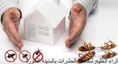 مكافحة حشرات بالمدينة المنورة - ثراء الخليج - 0534838744 | شركة ثراء الخليج | Scoop.it