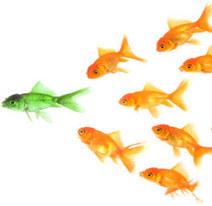 Les 6 caractéristiques d'un (bon) chef | Management or not management, that is the question | Scoop.it