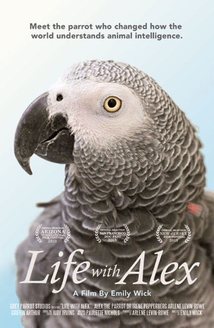 Film depicting parrot's cognitive skills to premiere at festival | TECHNO & SOCIETE | Scoop.it