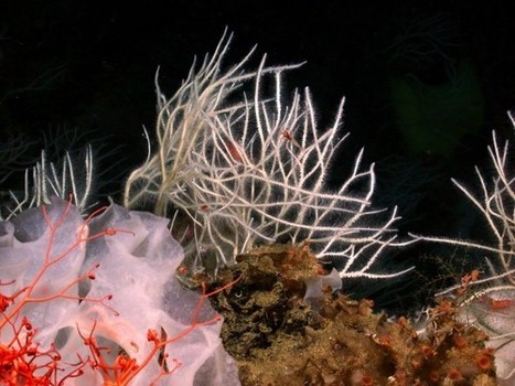 New Killer Sponges Found in the Deep Sea | Daily Magazine | Scoop.it