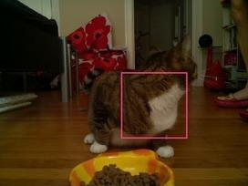 Raspberry Pi Camera | opexxx | Scoop.it