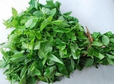 Trị nám da an toàn và hiệu quả nhất với lá rau ngót | ketbantamhuong9x | Scoop.it