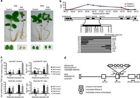 Identification of a novel salt tolerance gene in wild soybean by whole-genome sequencing : Nature Communications : Nature Publishing Group | Plant Gene Seeker -PGS | Scoop.it