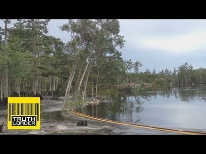 Giant sinkhole swallows trees in Assumption Parish, Louisiana - Truthloader | Real Estate in Corpus Christi | Scoop.it