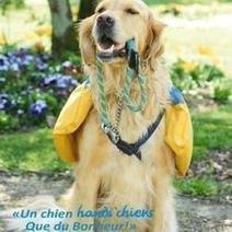 Handi'Chiens : Oui, un chien peut faire des miracles ! (Interview)   CaniCatNews-actualité   Scoop.it