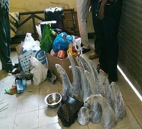 Interpol Busts Hundreds for Ivory, Rhino Horn Crimes | Rhino Poaching & Wildlife Crime | Scoop.it