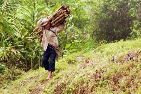 Q+A — Expert urges protective policies for bamboo, rattan trade - Thomson Reuters Foundation | BioArchitecture | Scoop.it