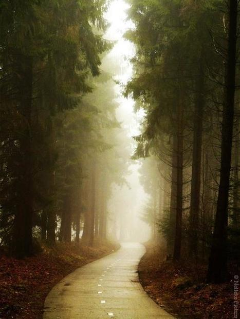 Photography by Nelleke Pieters | Everything Photographic | Scoop.it