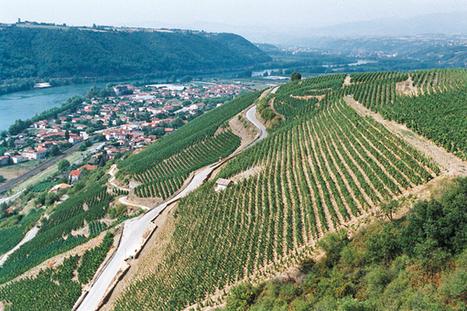 Condrieu le train ou la vigne - société - Tribune de Lyon | oenologie en pays viennois | Scoop.it