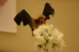 How does tongue works for bats? | onlinepetanswers | Scoop.it