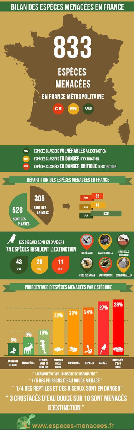 La biodiversité française menacée résumée en infographie | Biodiversité & Relations Homme - Nature - Environnement : Un Scoop.it du Muséum de Toulouse | Scoop.it